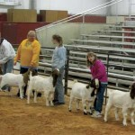 Local Youth Prepare For Junior Livestock Show At CC Fair