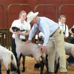 Jr. Livestock Sales Stay Solid Amid Tough Times