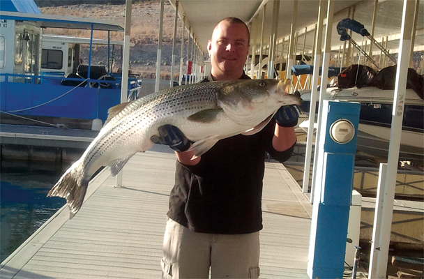 Lucky lure catches another big fish on lake mead for Fishing lake mead