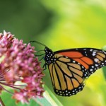 A Service Project To Bring The Butterflies To Town