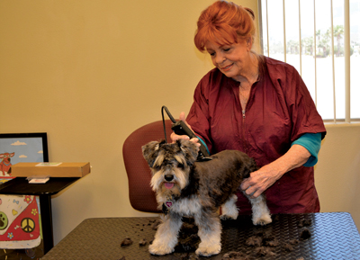 Dog Grooming Mesquite